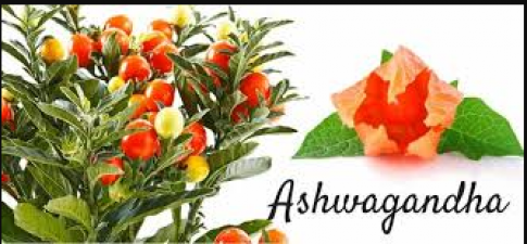 Ashwagandha not only has health benefits but also has skin benefits, know here!