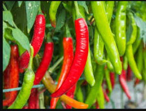 Green chillies help to get glowing skin, know its benefits