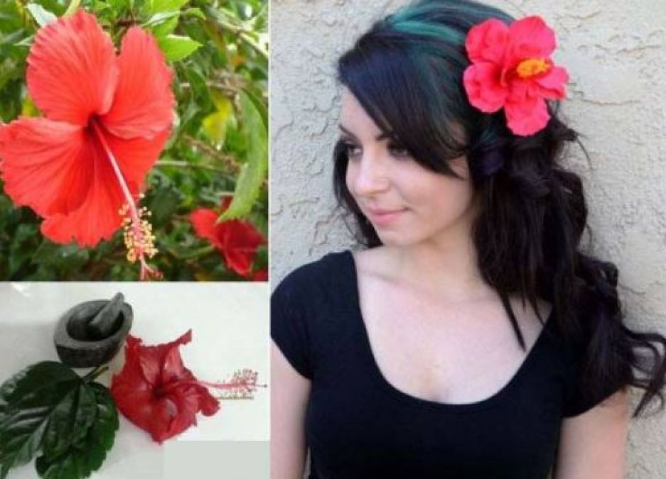खूबसूरती में लाभकारी है गुड़हल का फूल..