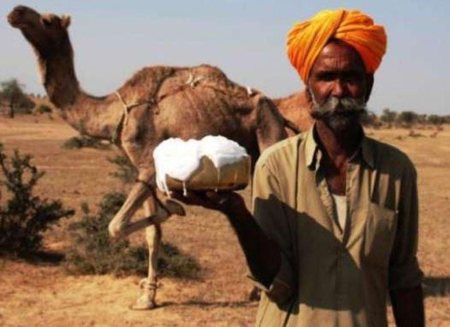शुगर की बीमारी मे पिएं इस जानवर का दूध, मिलेगी राहत