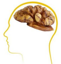 A Few Walnuts A Day May Help Boost Memory