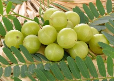 Amla is a boon for hair, skin and health, Learn Benefits