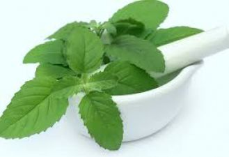 Drink Tulsi leaves with Milk to make you migraine-free