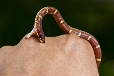 Never make these mistakes if a snake bites, may increase risk of life