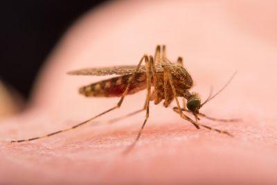 मच्छरों को भगाने के लिए अपनाएं ये घरेलू नुस्खे