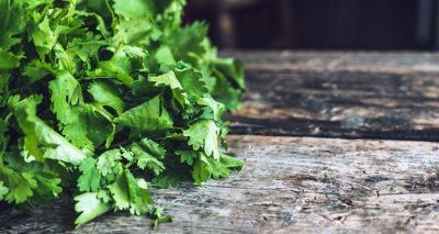 Green coriander increases eyesight, learn other benefits
