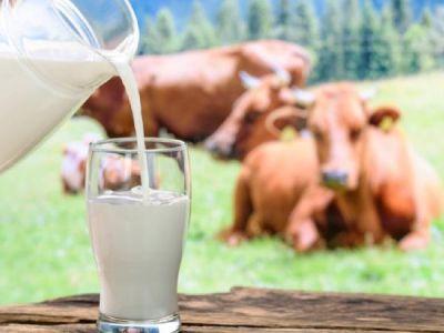 हर समस्या को खत्म करेगा गाय का दूध