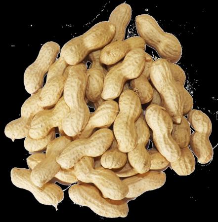 मूगफली खाये अच्छे कोलोस्ट्रोल को बढ़ाये