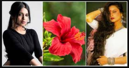 Hibiscus plant is boon for women, know its benefits