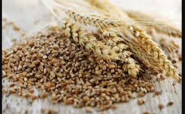 Know health benefits of whole wheat