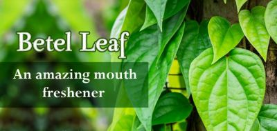 Betel leaves can also cure these diseases