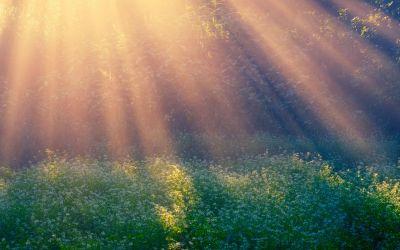 सुबह की धुप होती है कैल्शियम का अच्छा स्रोत