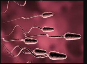 To increase the quality of sperm, take these things