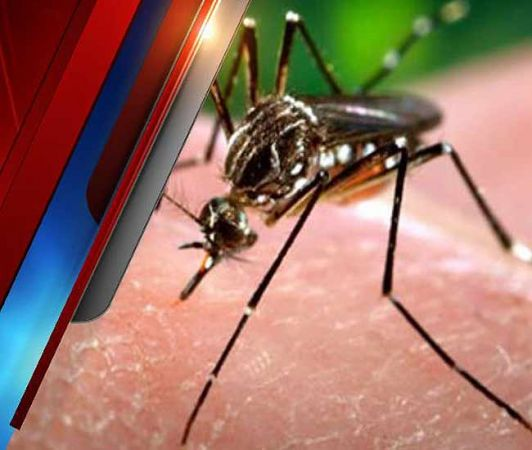 वायरल फीवर चिकनगुनिया और डेंगू जैसी बीमारियों से आराम दिलाती हैं यह  चीजें
