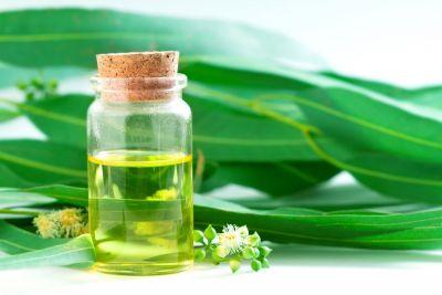 साइनस की बीमारी से छुटकारा दिलाता है यूकिलिप्टस का तेल