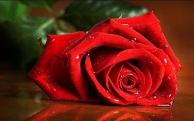 How to Use Rose Petals for Health Benefits