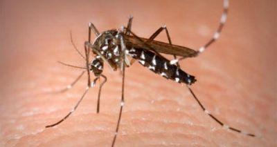 मच्छरों से छुटकारा पाने के लिए कैमिकल को कहें गुडबॉय, आजमाएं ये घरेलू नुस्खे