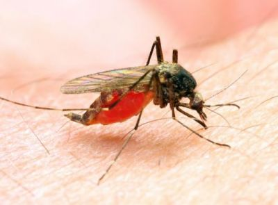 Domestic Ways to Treat Malaria, keep this in mind