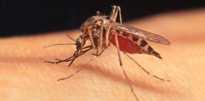 मच्छर मक्खी को भगाने के लिए अपनाएं घरेलू तरीके