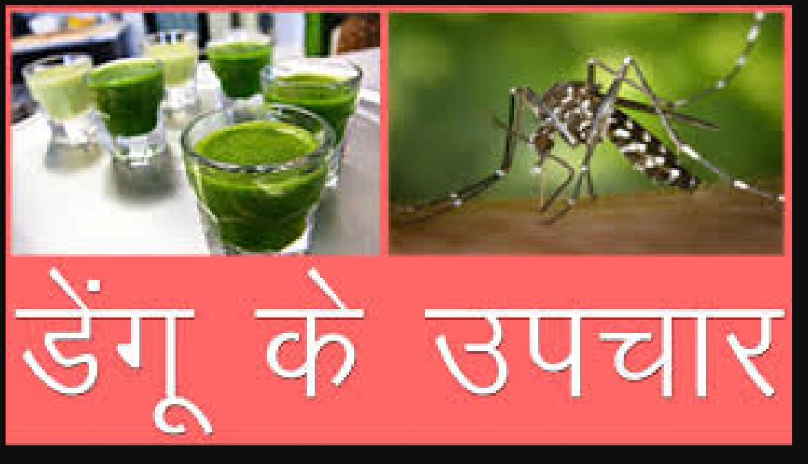 डेंगू के उपचार के लिए रामबाण है ये घरेलु नुस्खा , जरूर करे ट्राई