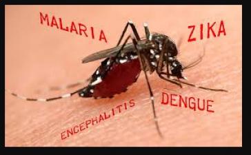 मच्छरों से होने वाली बीमारियों से बचने का ये है सटीक घरेलु उपाय