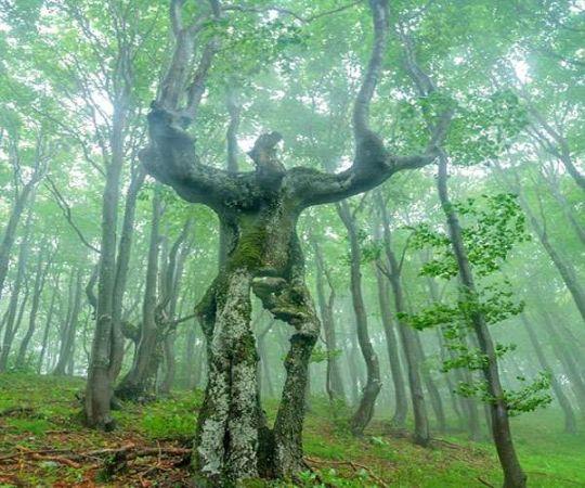 क्या आपने देखे हैं कभी ऐसे अजीबो गरीब पेड़