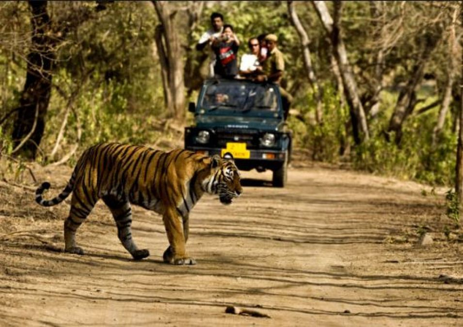 These jungle safaris are the best to visit in monsoons
