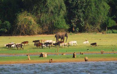 वाइल्ड लाइफ के शौक़ीन है तो ज़रूर जाये नागरहोल नेशनल पार्क