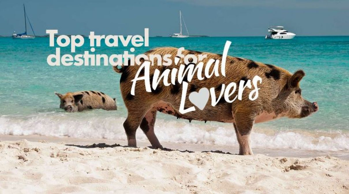 For Animal Lover These are the  Best Places,  Can see Animals