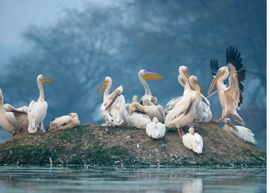 If you love birds, then definitely go for a trip to Bharatpur, this is the special