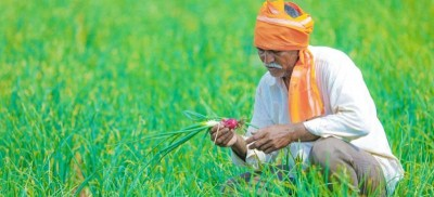 Telangana Government to secure paddy farmers interest, Waive off loan