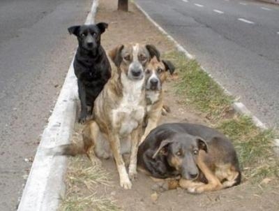 Stray Dog saved traffic police from a wild bear