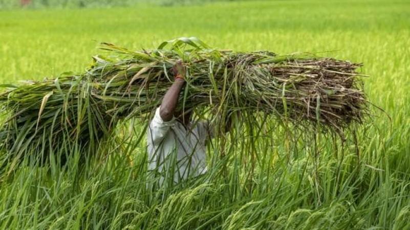 किसानों को दी गई मौसम की चेतावनी, आंध्रप्रदेश के इन पांच जिलों पर अलर्ट