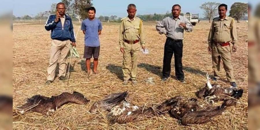असम में मृत पाए गए  4 हिमालयन ग्रिफन गिद्ध