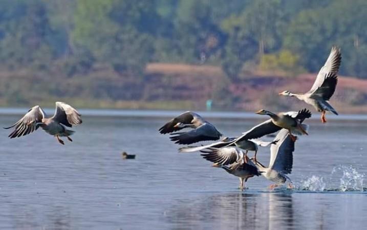 ओडिशा वन विभाग प्रवासी पक्षियों के शवों को संरक्षित करने की बना रहा है योजना