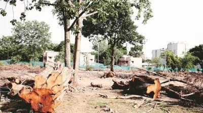 HC questions from Delhi Government: How can plants replace the trees?