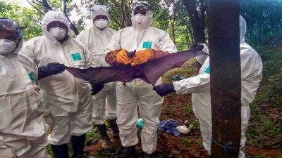 Nipah virus effect : Saudi Arabia bans products from Kerala