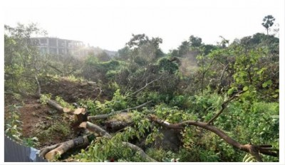 Kerala Government demands CBI probe into tree-felling case