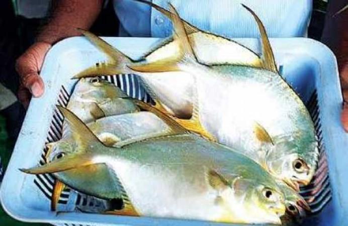 CMFRI ने उच्च मूल्य वाली समुद्री मछली के लिए हैचरी तकनीक को किया गया विकसित