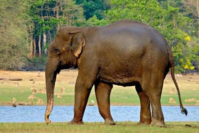 Kerala: Elephant hit by train, suffer serious injuries