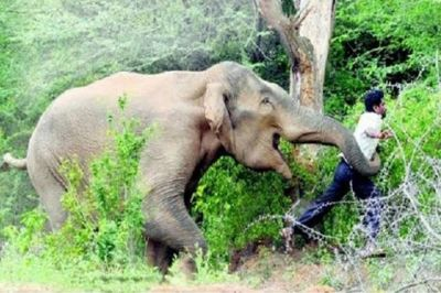 Elephant knock down a man as he gets close to take a selfie