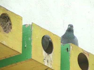 Jaipur Man set up 'housing scheme' to save birds from harsh weather conditions