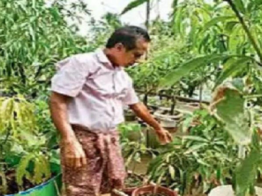 Kochi man plant 40 varieties mango trees on