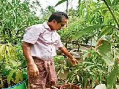 Kochi man plant 40 varieties mango trees on terrace