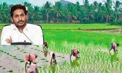 AP government disbursed Rs 1,820.23 crore for farmers, under YSR free crop insurance scheme