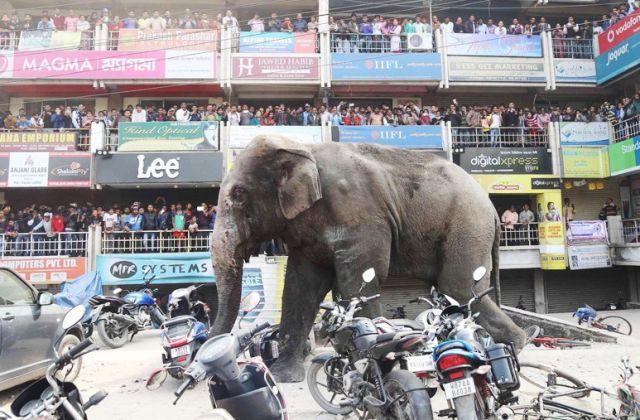 शहर में हाथी का आतंक देखिये वीडियो..