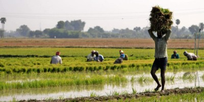 Odisha farmers stage protest over Govts paddy procurement and faulty token system