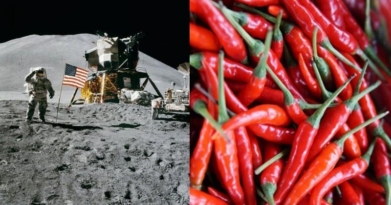 नासा अंतरराष्ट्रीय अंतरिक्ष स्टेशन पर अंतरिक्ष यात्रियों के लिए उगा रहा है मिर्च