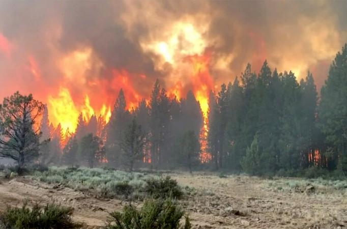 अमेरिका के जंगल में आग का कहर, कई एकड़ का इलाका जलकर हुआ खाक