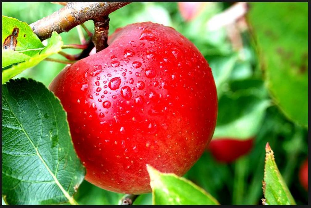 DIY Apple Scrub for Oily Skin, gives amazing benefits to your skin